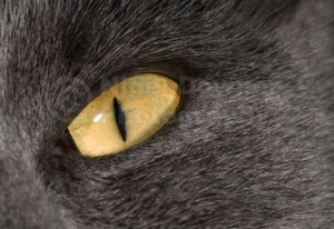 MA-0010 Cat's eye abstract