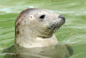 MA-0058 Common seal