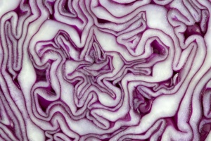 AB-0004 Red cabbage abstract