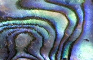 AB-0018 Abalone shell abstract