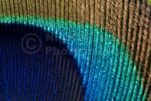 AB-0038 Peacock feather abstract