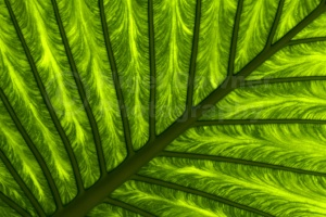 AB-0119 Giant green leaf abstract