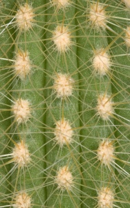 AB-0127 Golden ball cactus abstract