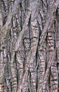 AB-0132 White willow bark abstract