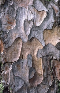 AB-0134 Scots pine bark abstract