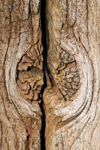AB-0143 Knot hole in wood abstract