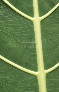AB-0164 Leaf pattern abstract