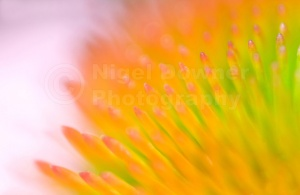 AB-0177 Coneflower soft focus abstract