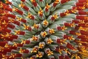 AB-0237 Aloe flower abstract