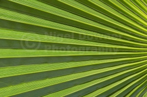 AB-0263 Palm leaf abstract