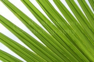 AB-0264 Palm leaf abstract