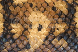 RE-0042 Boa constrictor skin pattern